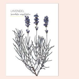 ansichtkaart lavendel