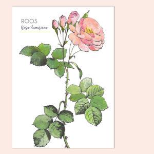 Ansichtkaart Roos