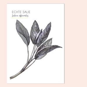 Ansichtkaart Salie